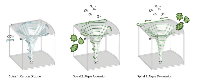 Algae Diagrams